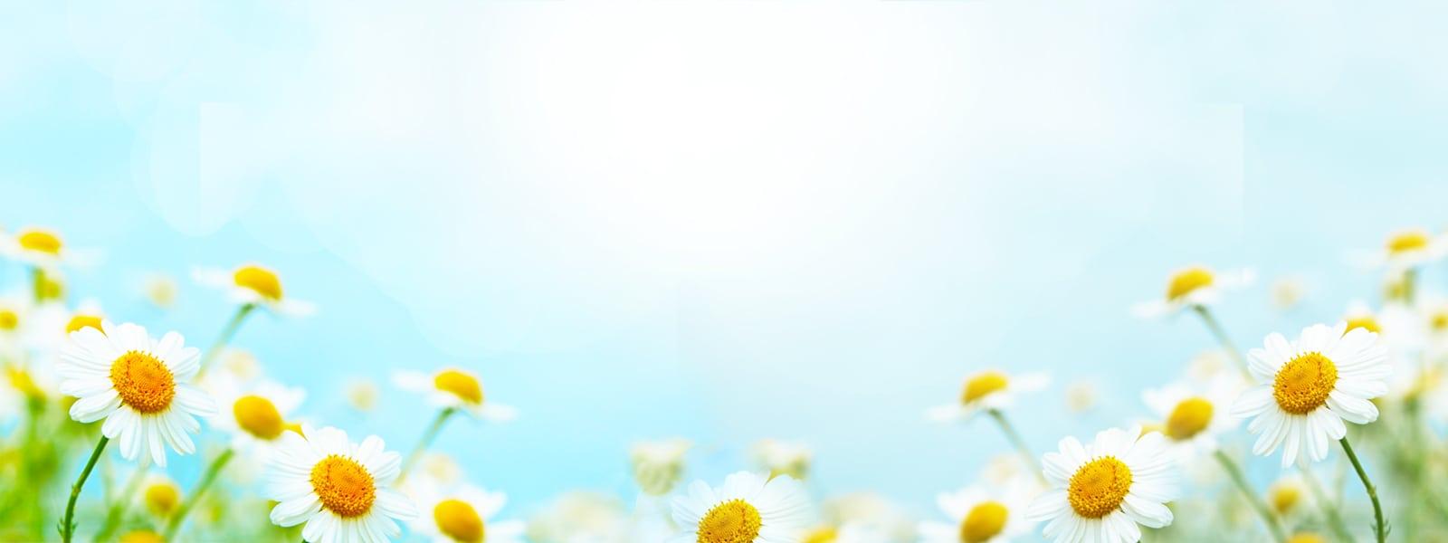 Muir-Homepage-Banner-Spring
